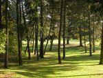 Nadelbäume am Südosthang der Düne