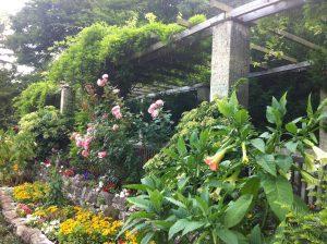 Der Rosengarten im Volkspark Humboldthain
