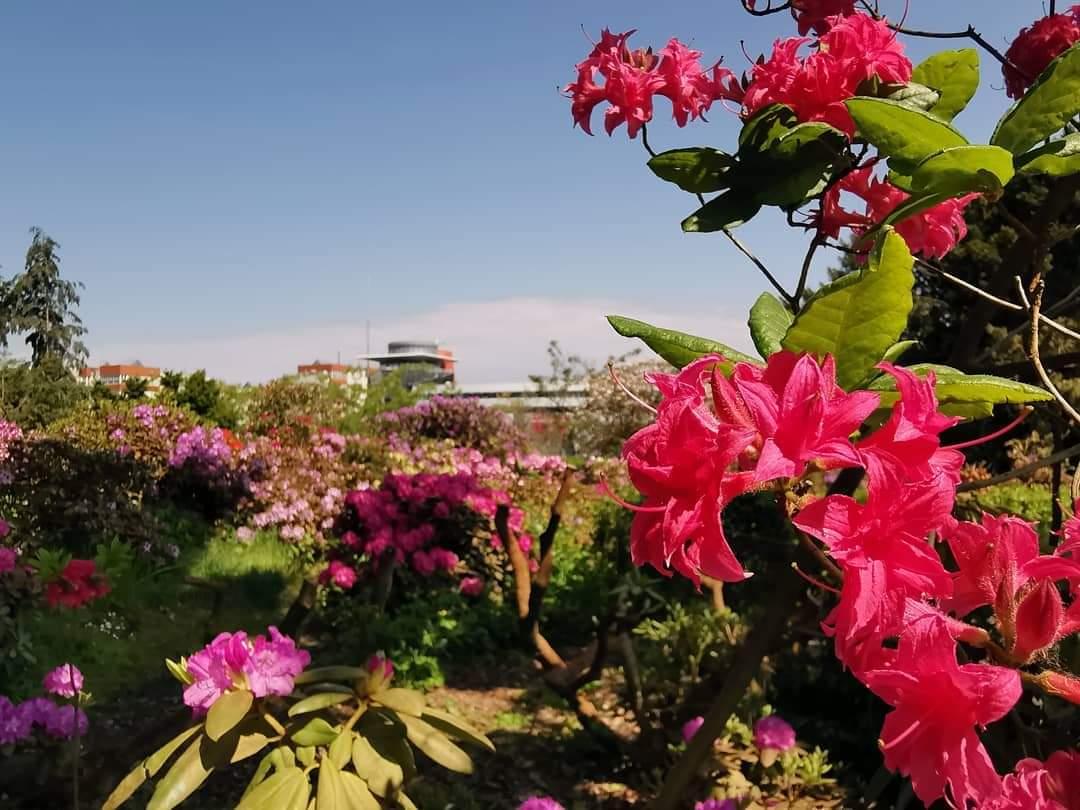 Blüten im Rosengarten