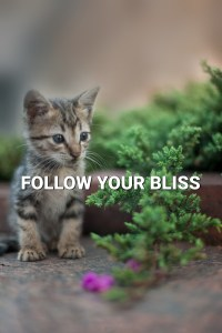 Kitty pondering nature. Text: Follow your bliss.