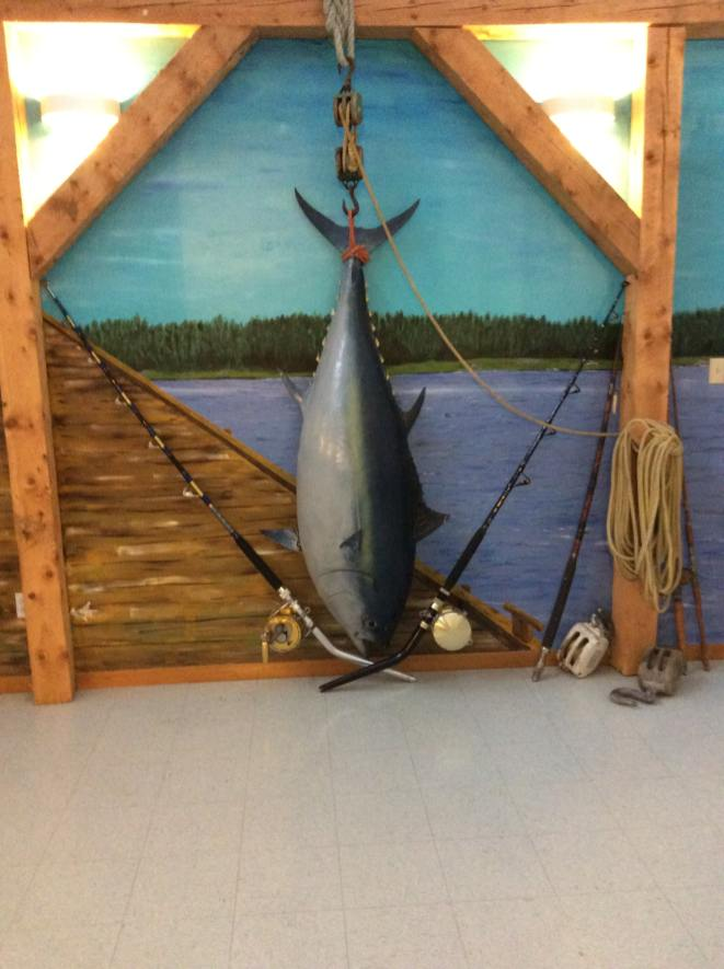 Large Tuna display