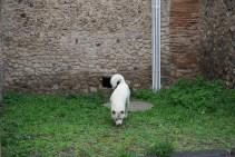 Pompeii's dogs!