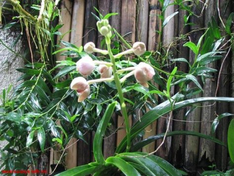 walingwaling-aug-01-2009