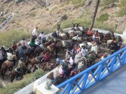 ...donkey traffic jam...