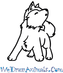 How to Draw a Baby Wolf Howling