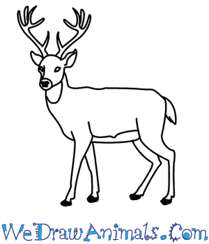 deer draw drawing easy animals reindeer pencil drawings cartoon animal fawn step getdrawings sketches steps tutorial