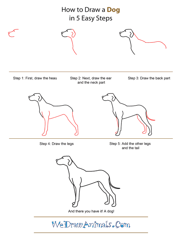 Dog Legs Drawing : drawing