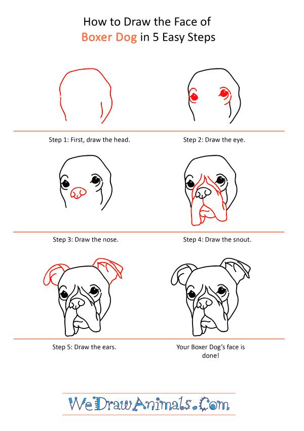 Dog Face Drawing : drawing, Boxer