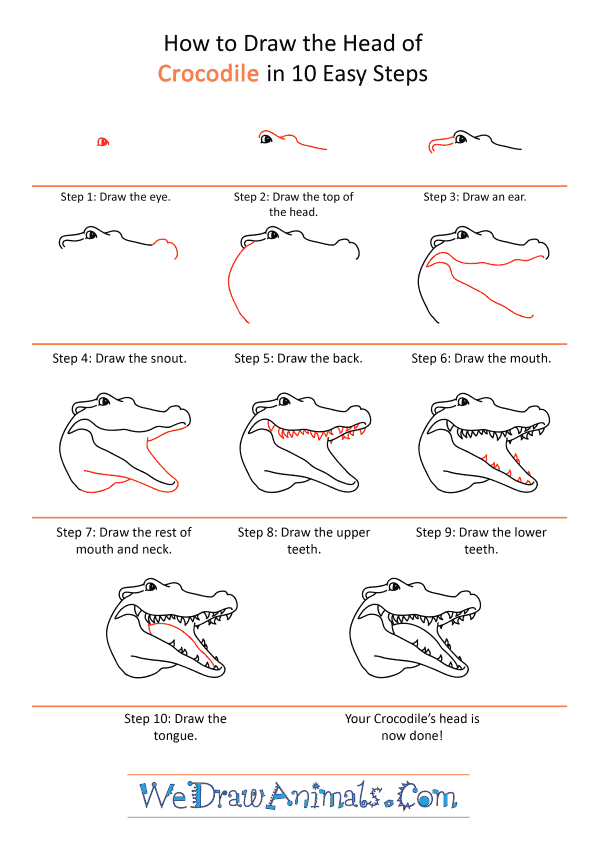 How To Draw An Alligator Head : alligator, Crocodile