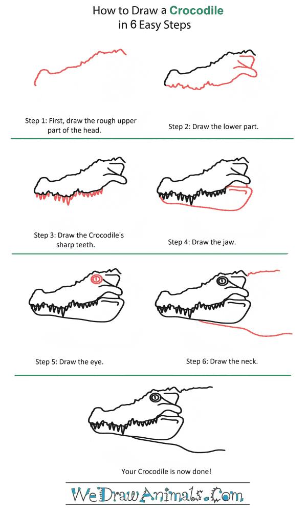 How to Draw an Alligator - Yedraw