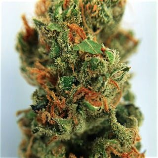 The White Marijuana(Indica Dominant Hybrid)