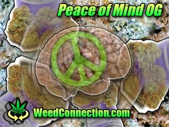 #PeaceOfMind #OG @WeedConnection