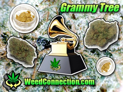 #Grammy #Tree @WeedConnection