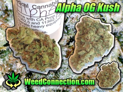 #Alpha #OG #Kush @WeedConnection