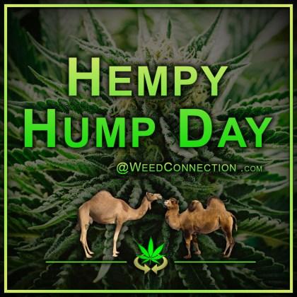#Hempy #HumpDay @WeedConnection