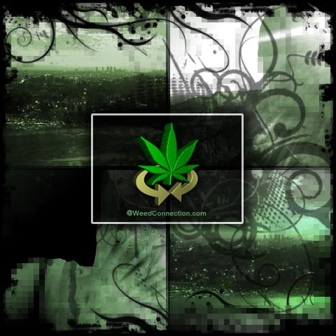 King Street Cannabis Co