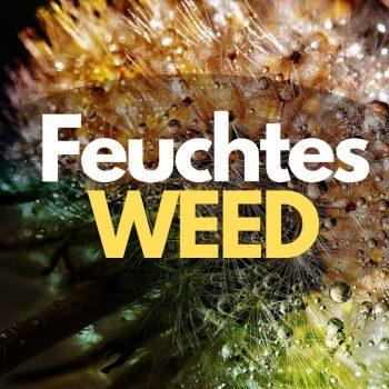 Kann man feuchtes Cannabis rauchen? Wie man es schnell trocknet erklärt www.weedin.de