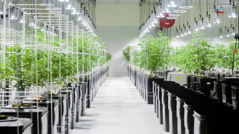 indoor cannabis cultivation warehouse