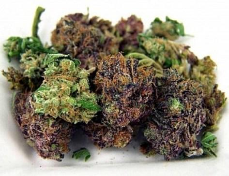 purple-green-cannabis-bud
