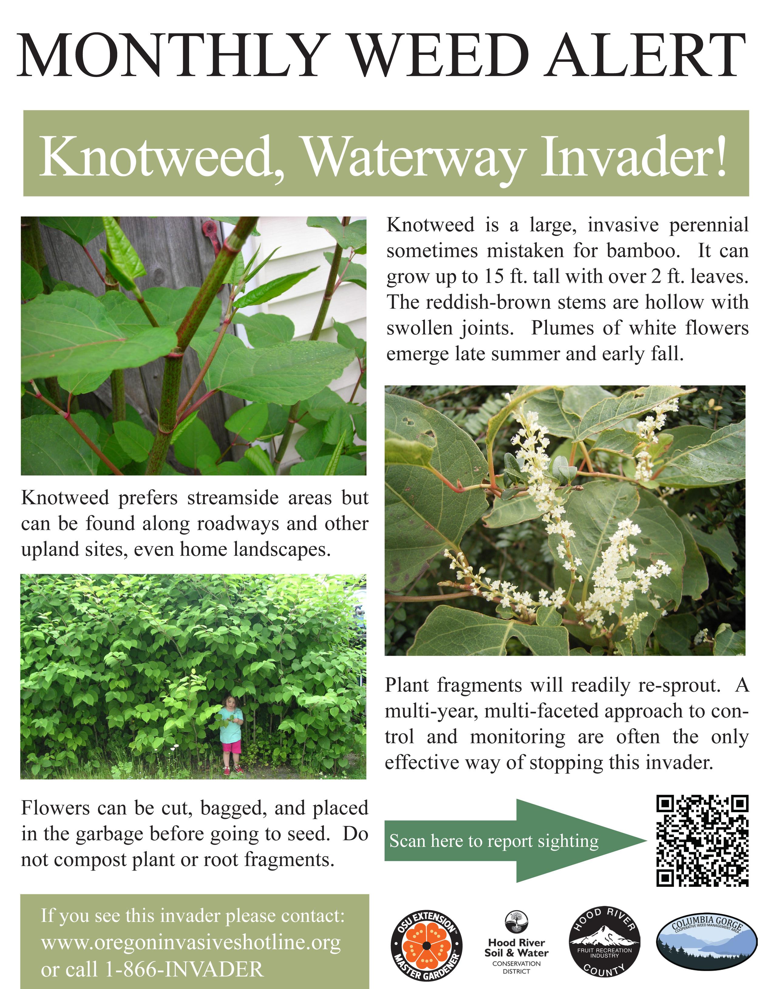 September-Knotweed-Weed-Alert-Poster