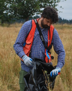 WeedWise Specialist, Jeff Lesh removing milkthistle seed heads from isolated plants