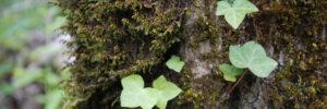 ivy-slider