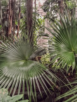 born-to-be-lovers-copenhague-jardin-botanique3