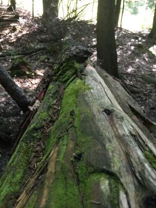 Presumpscot River Trail