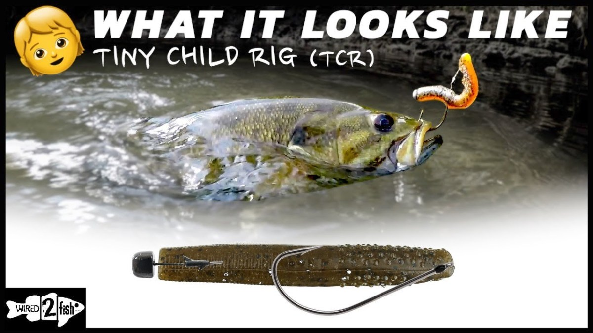 Fishing The Tiny Child Rig What It Looks Like Underwater Weekend Sportsman