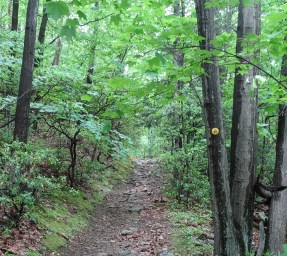 Wilkinson Memorial Trail