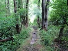 Upper Nyack Trail