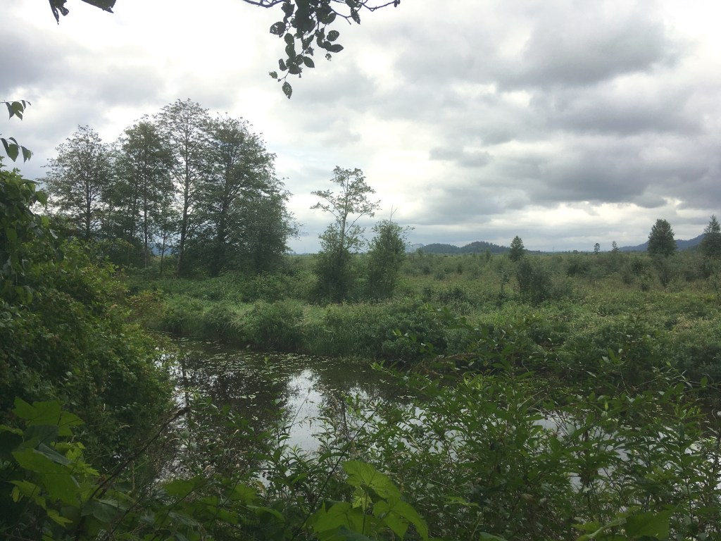 Looking out over the slough from the east dyke trail