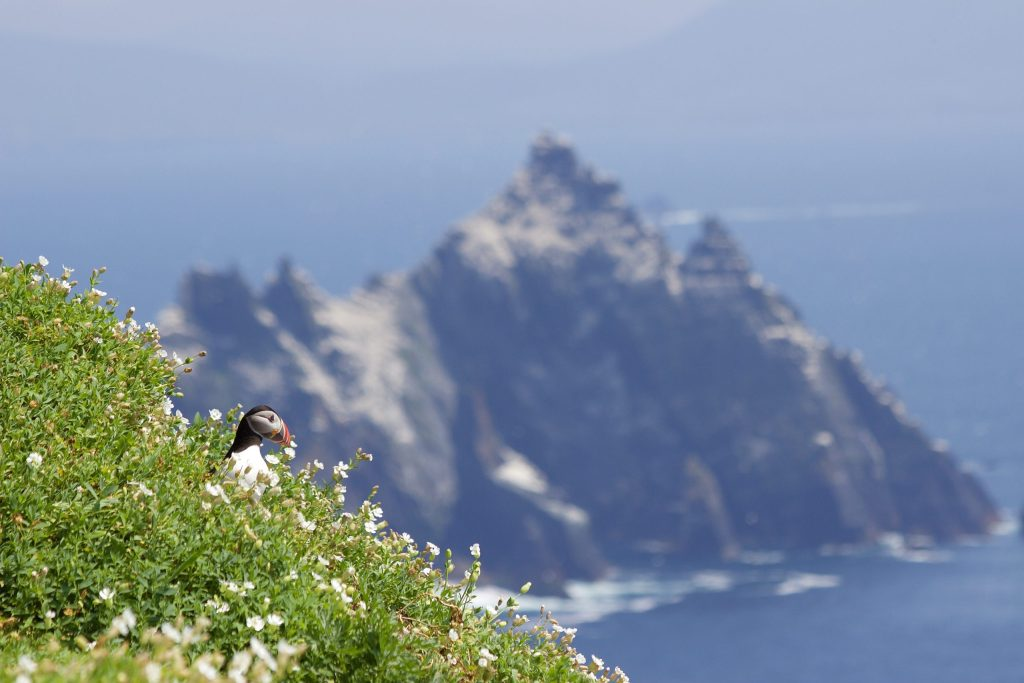 This is maybe my favourite photo and I think part of the reason is that the Atlantic Puffin (on Skellig Michael in Ireland) is framed in the corner third, while the open ocean and another rocky island take up the other 2/3.