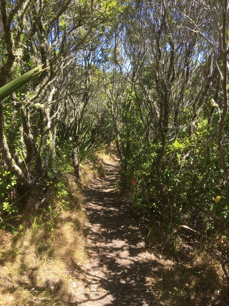 One of many picturesque trails on Tiritiri
