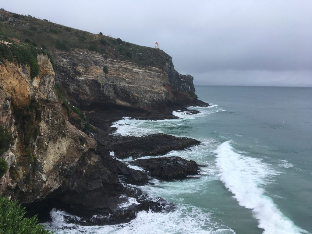Looking northward from the east side of the tip of Taiaroa Head; the white specks, halfway up the cliffs on the left are roosting Royal Spoonbill