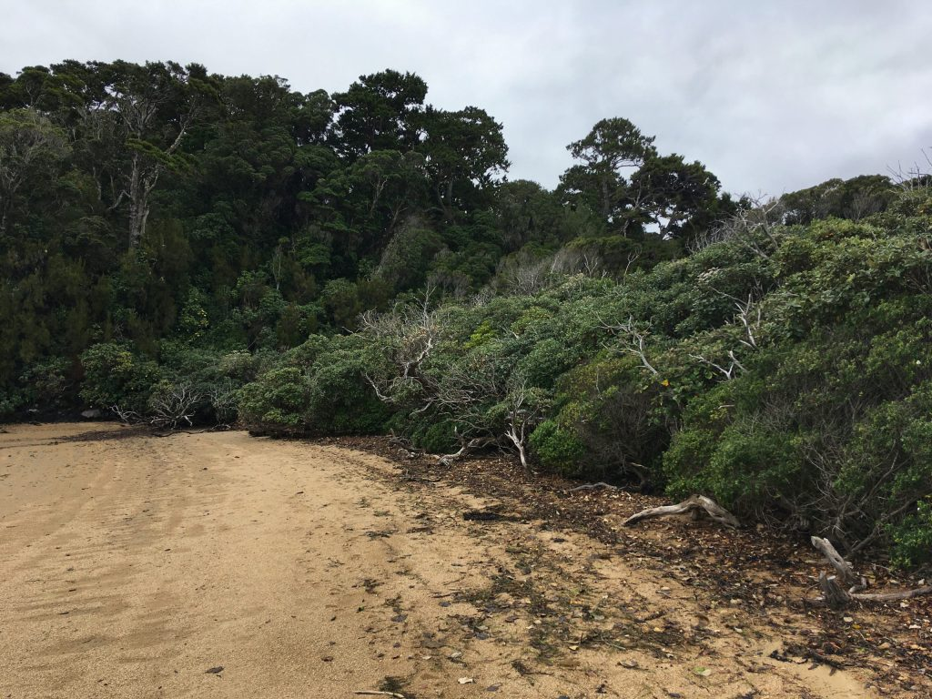On Ulva Island the forest encroaches on the beach, and vice versa