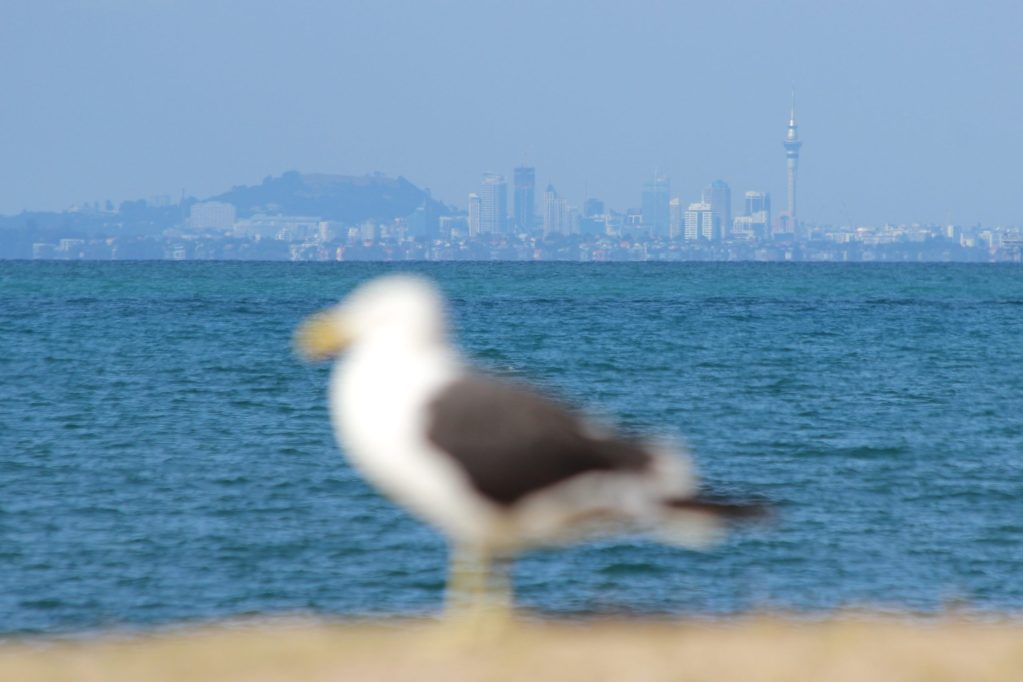What everyone else sees (Auckland skyline)
