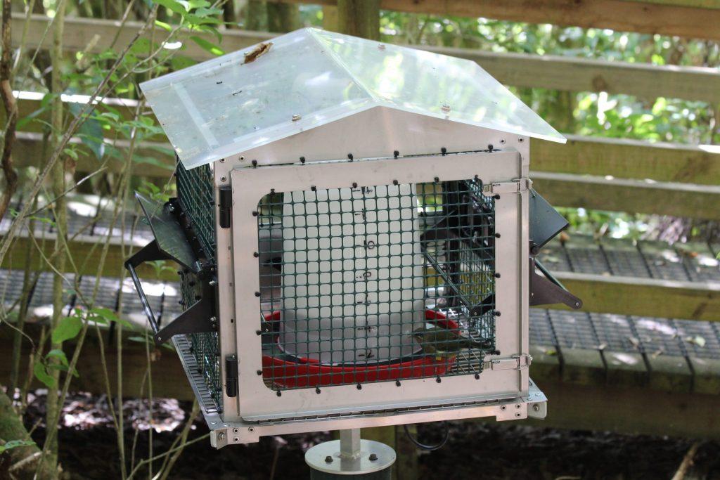 One of a few Bellbird feeders