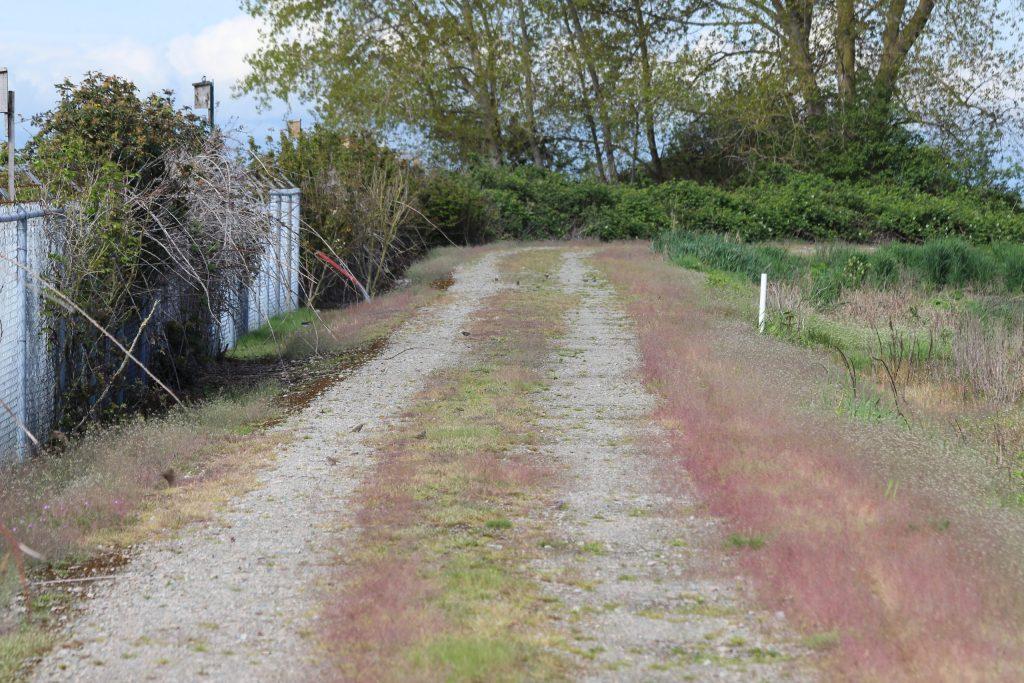 Dozens of sparrows line the path around Iona's inner ponds