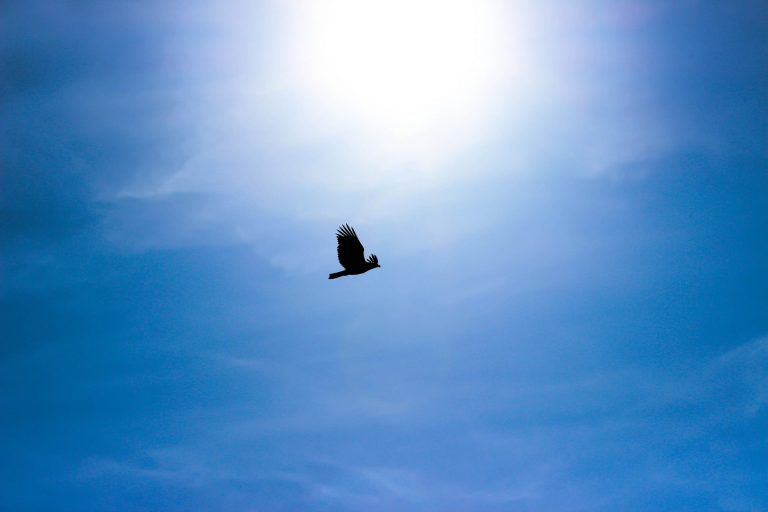 """A free bird…dares to claim the sky"""