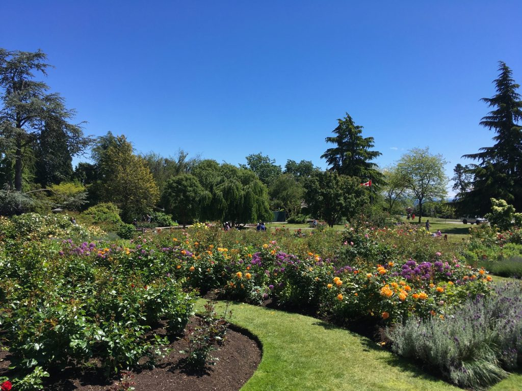 The Rose Garden at QE in full bloom