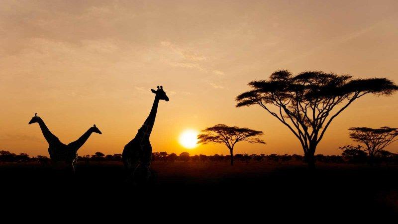 5 Amazing Safari Outfitters