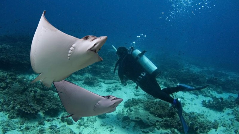 5 Best Grand Cayman Scuba Diving Spots