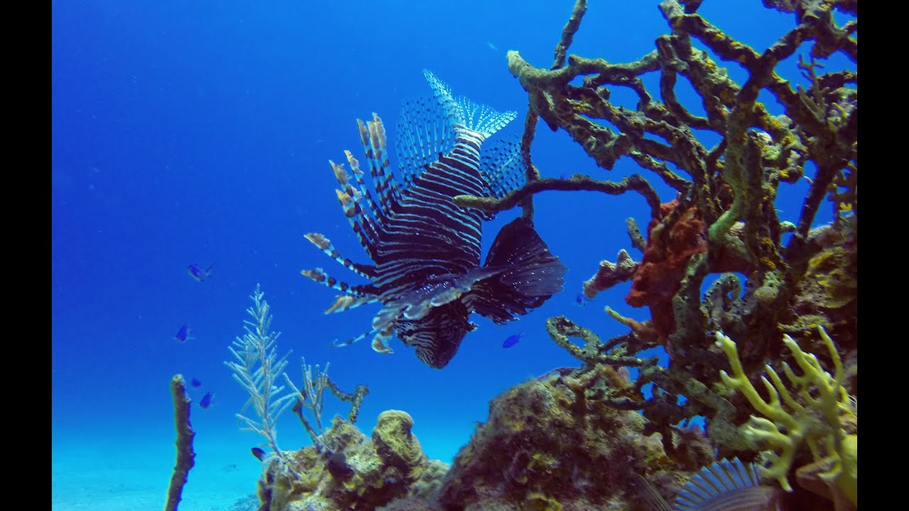 5 Best Diving Sites In Cuba