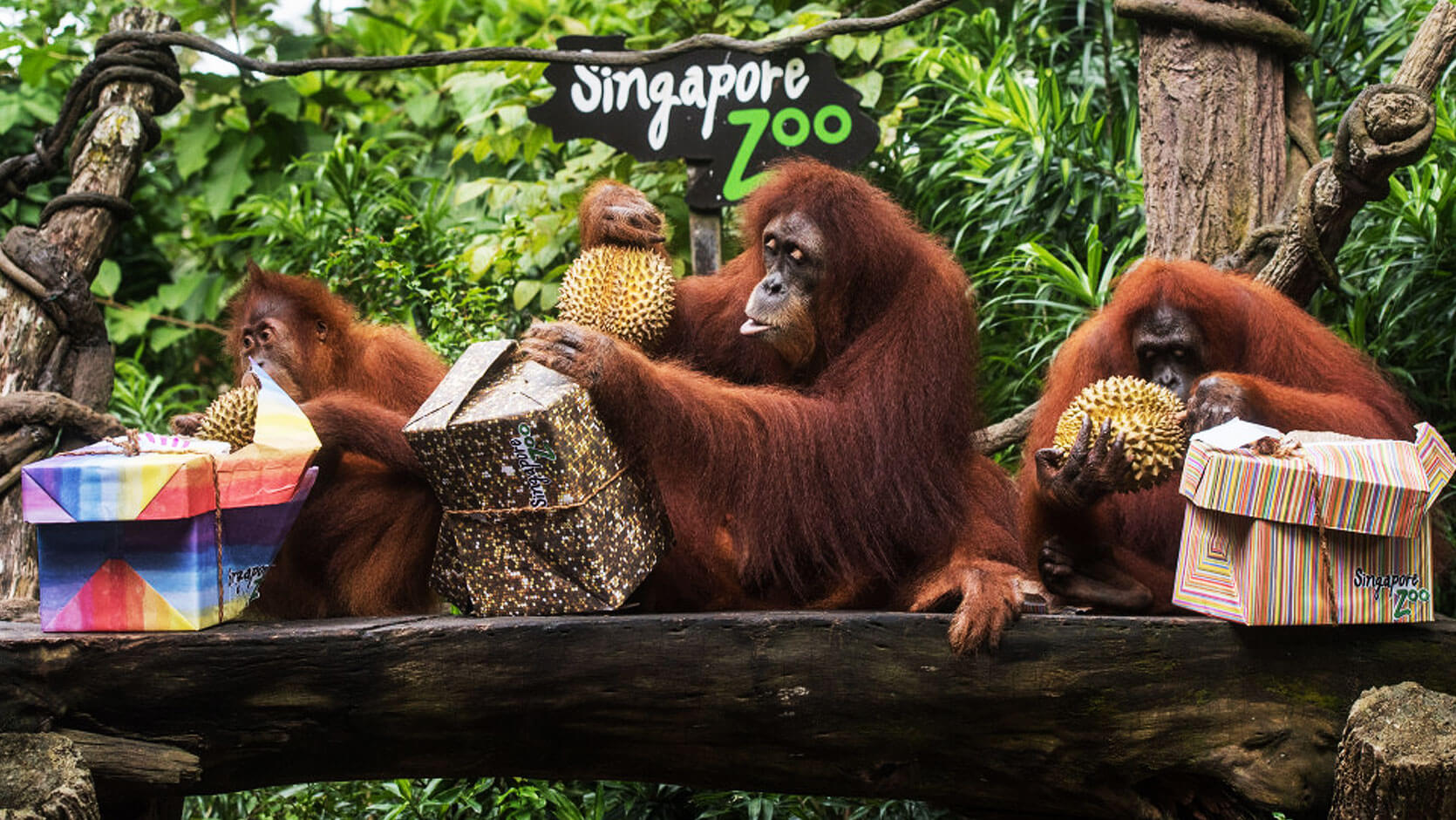 4 Attractions You Must Visit In Singapore