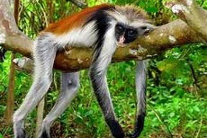 4 Places To Visit In Zanzibar