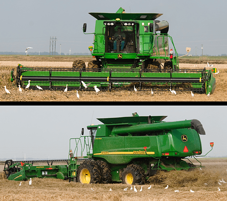 combines and egrets