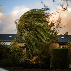 The storm wind in the tree.