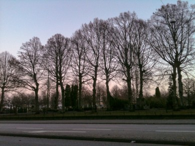 The trees on the Sankt Paul's churchyard have lost their leaves.
