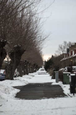 A residental street with rowhouses. The willows follow the old countryside road and was sheared every year and the boughs used for fodder or to make baskets. Notice the lump at the top of the trunk.